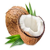 Coconut नारियल