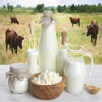 Fresh buffalo Milk