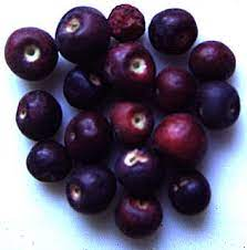 Phalsa fruit