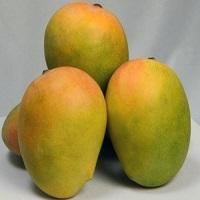 Kesar Premium Mango