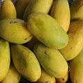 Dasheri  Mango Box premium